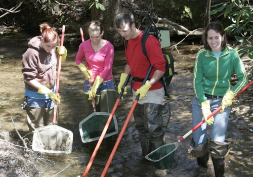 Students with fishing nets collecting specimens in Bent Creek